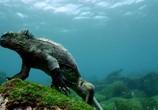 Сцена из фильма Галапагосы с Дэвидом Аттенборо / Galapagos with David Attenborough (2013)