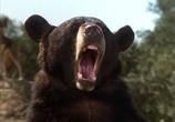 Сцена из фильма Книга джунглей: История Маугли / The Jungle Book: Mowgli's Story (1998) Книга джунглей: История Маугли сцена 3