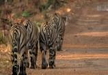 Сцена из фильма Банда тигриц / Tigress Blood (2014) Банда тигриц сцена 6