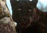 Сцена из фильма Книга джунглей: История Маугли / The Jungle Book: Mowgli's Story (1998) Книга джунглей: История Маугли сцена 4