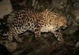 Сцена из фильма Discovery. Хранители земли леопарда / Хранители земли леопарда (2016) Discovery. Хранители земли леопарда сцена 5