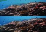 Сцена из фильма Последний риф 3D / The Last Reef 3D (2012) Последний риф 3D сцена 4