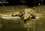 ТВ Discovery Channel: Animal Planet: Речные монстры / River monsters (2009) - cцена 1