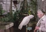 Сцена из фильма Убийцы леди / The Ladykillers (1955) Убийцы леди сцена 1