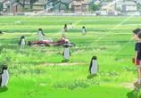 Сцена из фильма Тайная жизнь пингвинов / Penguin Highway (2018)